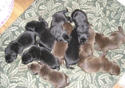 Bella Puppies 10-27-07011