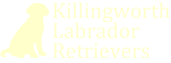 Killingworth Labrador Retrievers