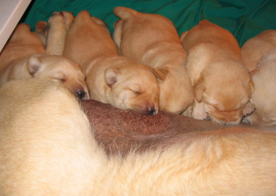 Pups 005
