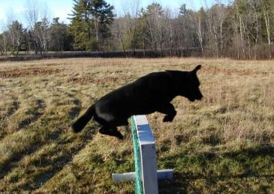 marley jump2